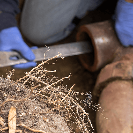 Removing Tree Roots from Drains