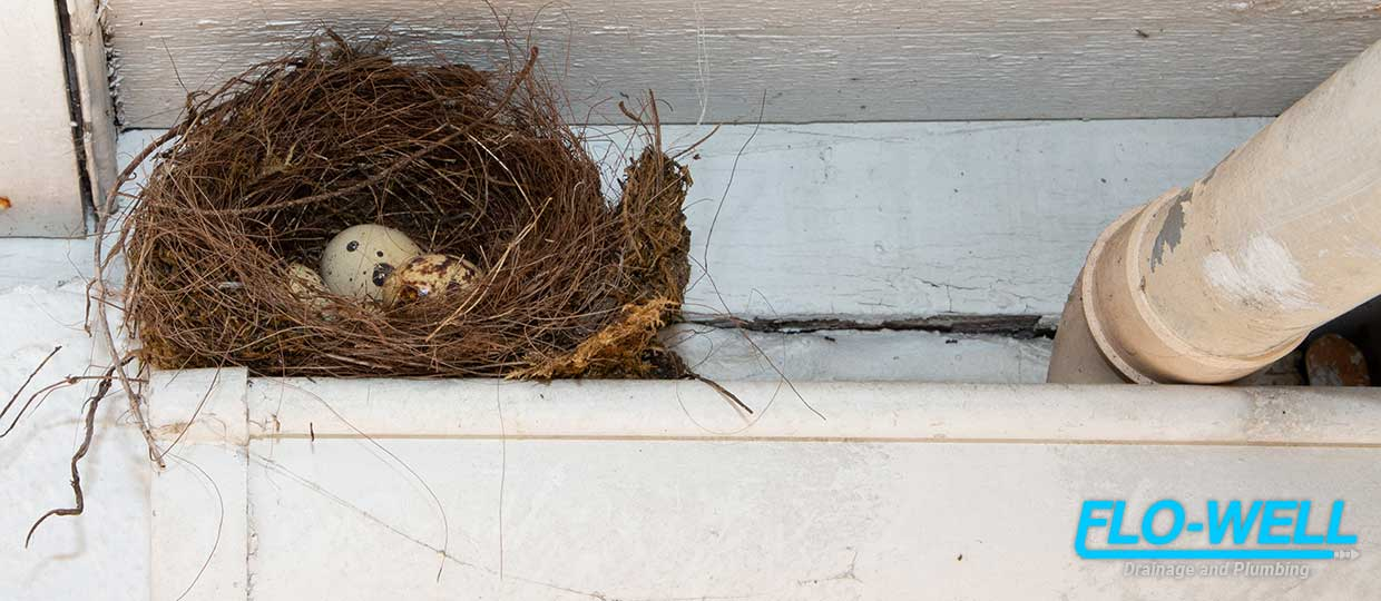 Dealing With Bird Nests in Your Gutters